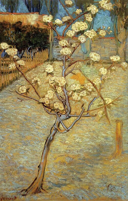 Blossoming Peor Tree, 1888 by Vincent Van Gogh